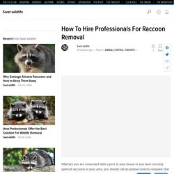 How To Hire Professionals For Raccoon Removal