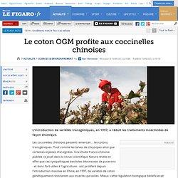 LE FIGARO 15/06/12 Le coton OGM profite aux coccinelles chinoises