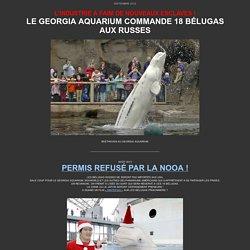 Le Georgia Aquarium commande 18 bélugas capturés par les Russes, bélugas captifs programme de reproduction en bassin, captures de dauphins, capture de bélugas, capture d'orques