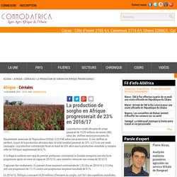COMMODAFRICA 14/11/16 La production de sorgho en Afrique progresserait de 23% en 2016/17