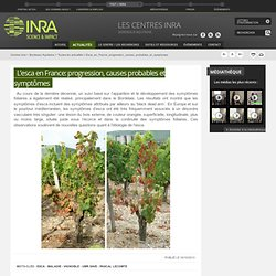 INRA 16/10/13 L'esca en France: progression, causes probables et symptômes