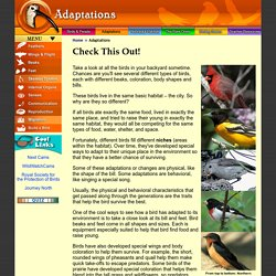 Project Beak: Adaptations