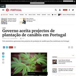 Governo aceita projectos de plantação de canábis em Portugal - Portugal - SÁBADO