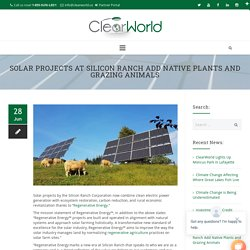 Solar Projects at Silicon Ranch Add Native Plants and Grazing Animals