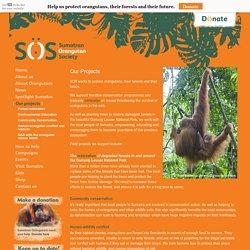 Our projects – Sumatran Orangutan Society