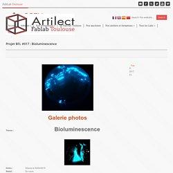 Projet BFL #017 : Bioluminescence