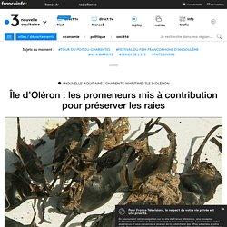 Île d'Oléron : les promeneurs mis à contribution pour préserver les raies