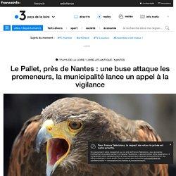 Le Pallet, près de Nantes : une buse attaque les promeneurs, la municipalité lance un appel à la vigilance - France 3 Pays de la Loire