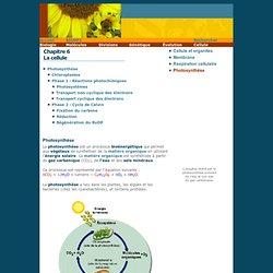 Site de Michel Pronovost > Cours de biologie NP1 > Photosynthèse