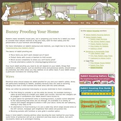 Bunny Proofing- Protect Your Home from Digging / Chewing