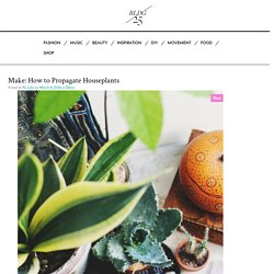Make: How to Propagate Houseplants – Free People Blog