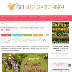 How To Propagate Lavender Plants From Cuttings - Get Busy Gardening
