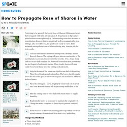 How to Propagate Rose of Sharon in Water