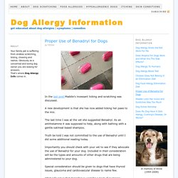 Proper Use of Benadryl for Dogs