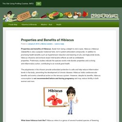 Properties and Benefits of Hibiscus – NatureWord
