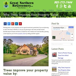 Why Trees Improve Your Property Value