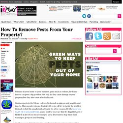 How To Remove Pests From Your Property