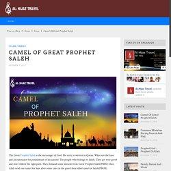 Camel Of Great Prophet Saleh - Alhijaz Travel Official BlogAlhijaz Travel Official Blog