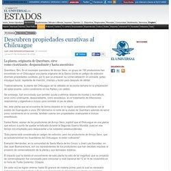 Los Estados - Descubren propiedades curativas al Chilcuague