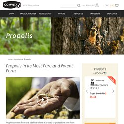 About Propolis Ingredients and Benefits