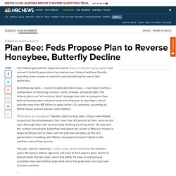 Plan Bee: Feds Propose Plan to Reverse Honeybee, Butterfly Decline