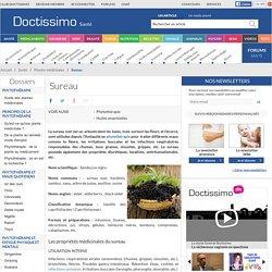 Sureau (Sambucus nigra) : propriétés, bienfaits de cette plante en phytothérapie
