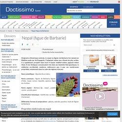 Nopal (figue de Barbarie) (Opuntia ficus indica) : propriétés, bienfaits de cette plante en phytothérapie