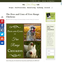 The Pros and Cons of Free Range Chickens - The Free Range Life