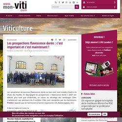MON VITI 22/09/17 Bourgogne - Les prospections flavescence dorée : c'est important et c'est maintenant !