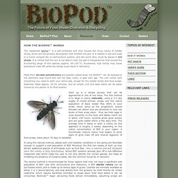 ProtaCulture - How to Raise, Grow & Harvest Black Soldier Flies