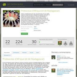Les herbonautes: Proteaceae d'Afrique
