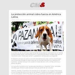 La protección animal cobra fuerza en América Latina