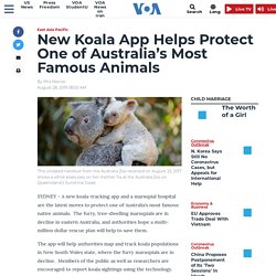 New Koala App Helps Protect One of Australia's Most Famous Animals