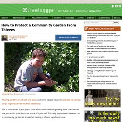 How to Protect a Community Garden From Thieves : TreeHugger