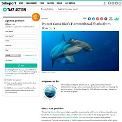 Protect Costa Rica's Hammerhead Sharks from Poachers