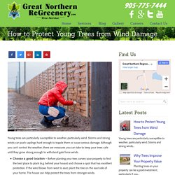 How to Protect Young Trees from Wind Damage