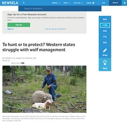 To hunt or to protect? Western states struggle with wolf management