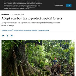 Adopt a carbon tax to protect tropical forests