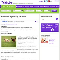 Protect Your Dog From Dog Park Bullies - Petfinder