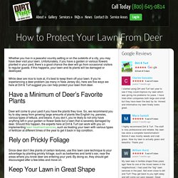 How to Protect Your NJ Lawn From Deer