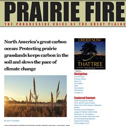 North America's great carbon ocean: Protecting prairie grasslands keeps carbon in the soil and slows the pace of climate change