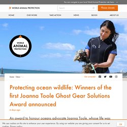 Protecting ocean wildlife: Winners of the first Joanna Toole Ghost Gear Solutions Award announced