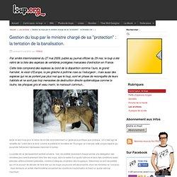 """Gestion du loup par le ministre chargé de sa """"protection"""" : la t"""