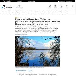 """L'étang de la Horre dans l'Aube : la protection """"en équilibre"""" d'un milieu créé par l'homme et adopté par la nature"""