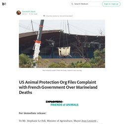 US Animal Protection Org Files Complaint with French Government Over Marineland Deaths