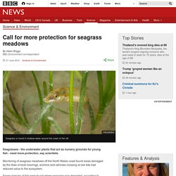 Call for more protection for seagrass meadows