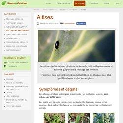 Altises : protections et traitements bio au potager