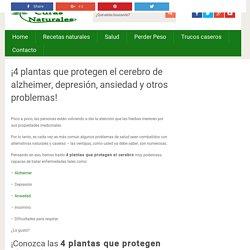 4 Plantas que Protegen el Cerebro de Alzheimer, Depresión y Ansiedad