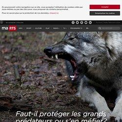 Faut-il protéger les grands prédateurs ou s'en méfier? La question divise en Suisse.