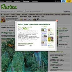 Protéger ses récoltes au potager bio